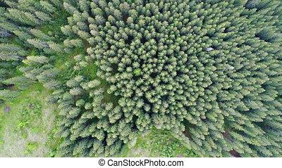 antenna vadászterület, közül, zöld erdő