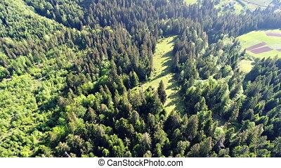 antenna, zöld, lövés, erdő
