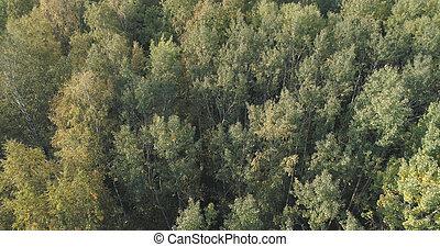 antenne, september, træer, efterår skov, udsigter