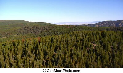 antenowy strzelony, od, las, i, góry, z, zmarłe drzewa