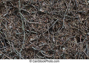 Anthill background texture in the forest closeup
