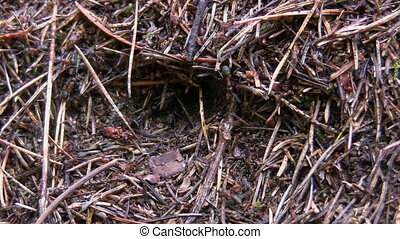 Anthill community close up
