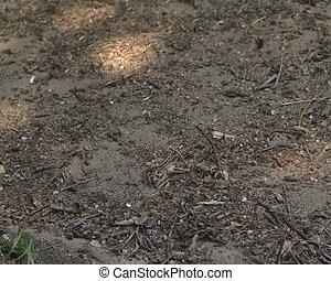 Anthill forest ants work