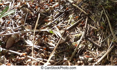 Anthill in forest