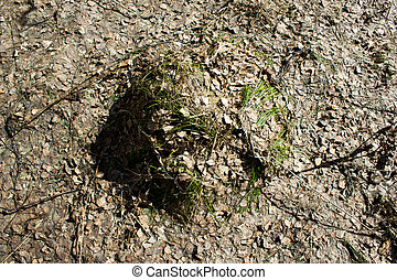 Anthill in spring forest