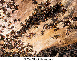 anthill in the tree