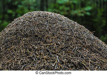 anthill in the woods - big anthill withnout a branch in a...