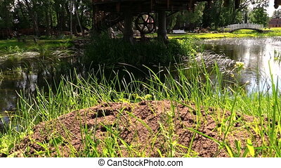 anthill near stream - big anthill covered with grass beside...