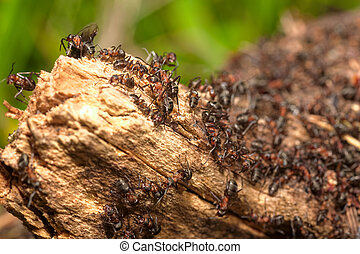 Anthill on a tree trunk