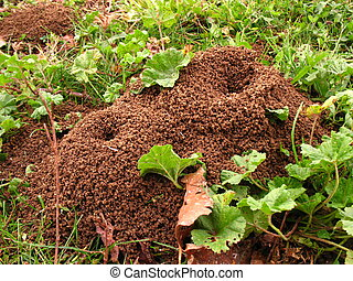 Anthill in an italian wood
