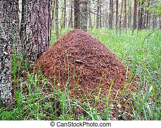 Anthill near pine, wildlife