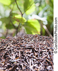 anthill with blurred green background in the forest. Macro