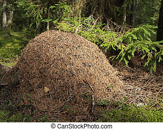 Anthill          - Anthill in the forest