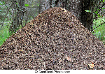 Anthill - The anthill in the forest