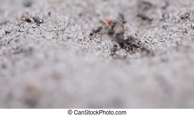 Anthill - Macro dwelling ants in an anthill actively moving