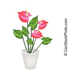 Beautiful Flower, An Illustration Heart Shaped Spathe of Blooming Red Anthurium Flowers or Flamingo Flower in Flowerpot for Garden Decoration Isolated on A White Background