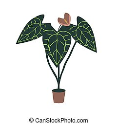 Anthurium hose plant vector illustration