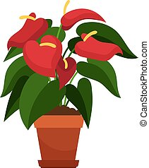 Anthurium houseplant in flower pot vector icon on white...