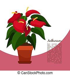 Anthurium indoor plant in pot banner template, vector illustration