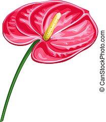 Anthurium, summer tropical flower. Cartoon style vector illustration. Exotic hawaiian element. Vector illustration.