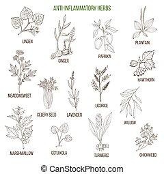 Anti-inflammatory herbs. Hand drawn set of medicinal plants