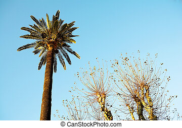 Antibes #45 - Palm tree and other trees in Antibes, France....