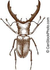 anticaglia, incisione, scarabeo, illustrazione, cervo