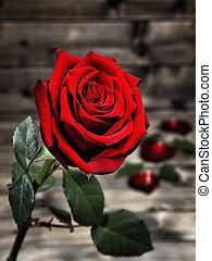 anticaglia, legno, rosa, closeup, tavola., rosso