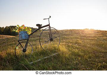 antický, bojiště, hrnec, květ, jezdit na kole