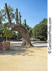 antiga, árvore