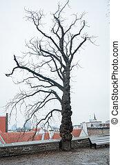 antigas, árvore.