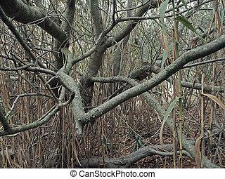 antigas, abstratos, árvore, torcido, fundo, ramos, bambu