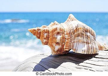 antigas, conch, tronco árvore, washed-out, praia