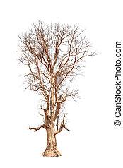 antigas, e, árvore morta, isolado, branco, fundo
