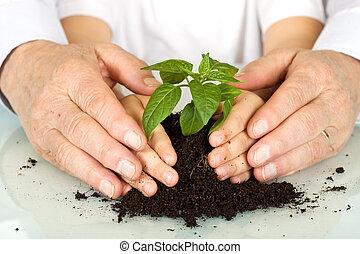 antigas, e, jovem, mãos, protegendo, um, novo, planta