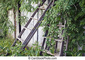antigas, escada, antigas, cerca, crescendo, erva daninha