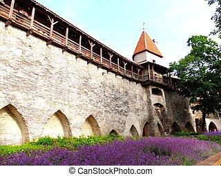 antigas, estónia, cidade, paredes, tallinn, castelo