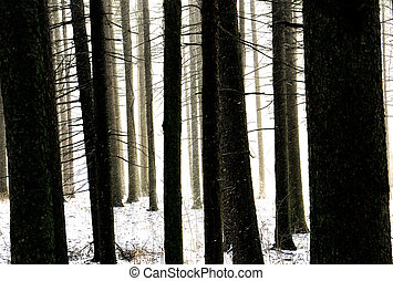 antigas, floresta