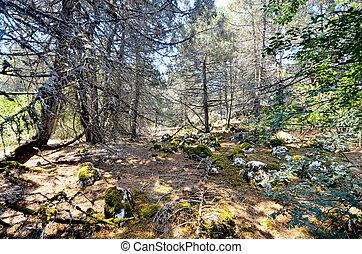antigas, foetid, junípero, floresta, ligado, um, ilha, golem, grad, lago, prespa, macedonia