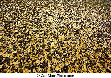 antigas, foliage outono