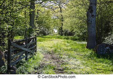 antigas, madeira, portão, em, um, fresco, e, brilhante, verde, estrada rural, através, um, decíduo, floresta, em, springtime., de, a, sueco, ilha, oland