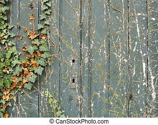 antigas, madeira, sobre, verde, crescendo, porta, hera