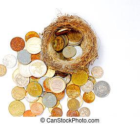 antigas, ninho, moedas, fundo, novo, pássaro branco
