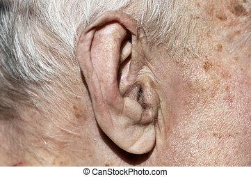 antigas, orelha, em, macro