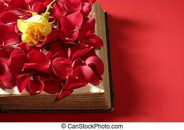 antigas, rosa, sobre, pétalas, livro, envelhecido