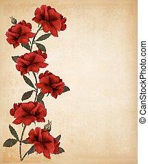 antigas, rosas, experiência., papel, vector., vermelho