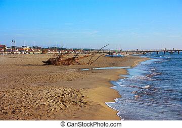 antigas, sob, arenoso, sol, árvore, secos, ar, abandonado, praia, troncos, madeira, sal