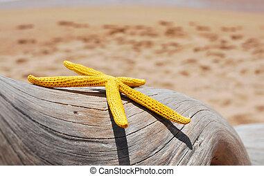 antigas, starfish, árvore, amarela, tronco, washed-out, praia