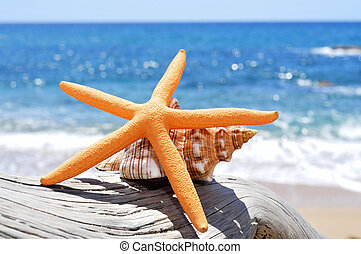 antigas, starfish, conch, tronco árvore, washed-out, praia