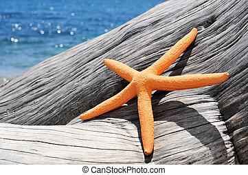 antigas, starfish, tronco árvore, laranja, washed-out, praia